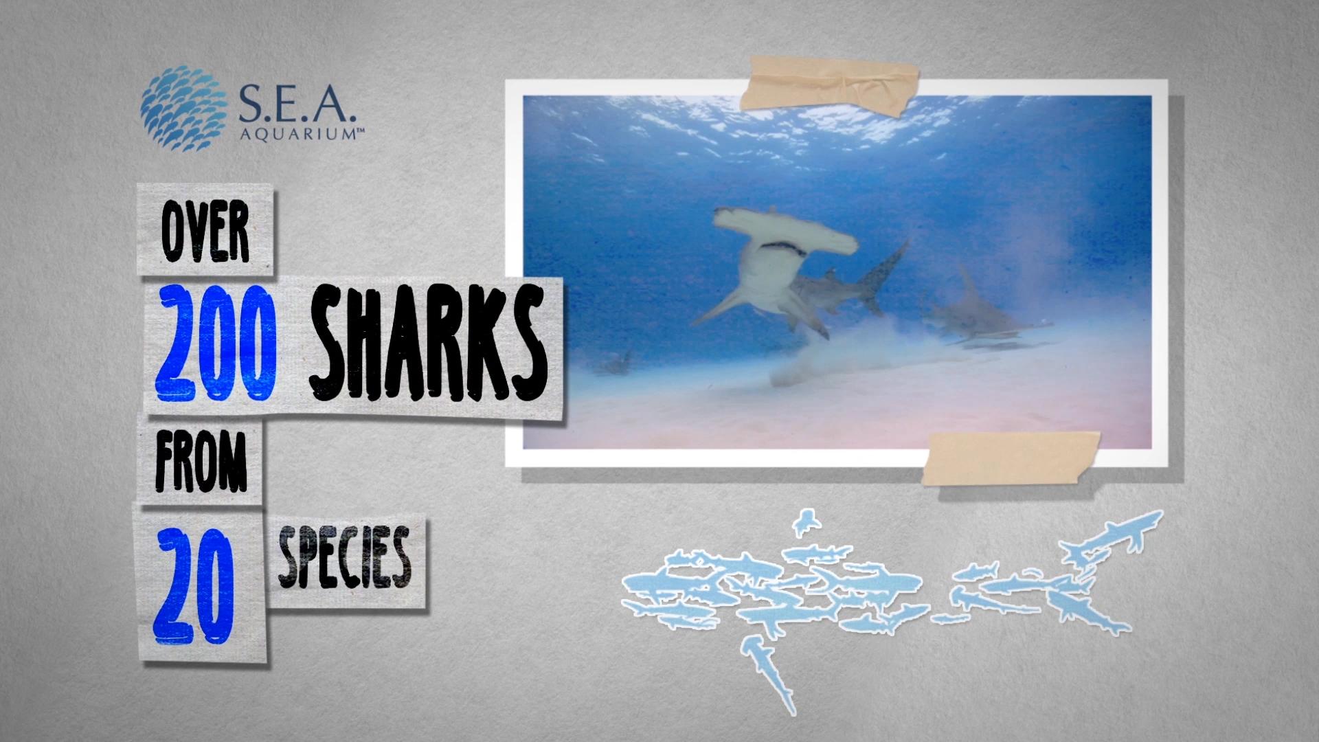 Offset_RWS_Sharks_v2 (0-00-10-05)